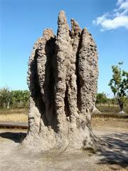 Fenotipo extendido de las termitas